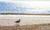 Sugar_Sand_Unit_A_St_Augustine_Beach_Vacation_Apartment (25)