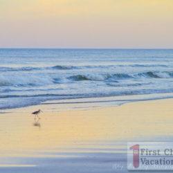 Pelican Roost Rental Home St. Augustine Bird on Beach
